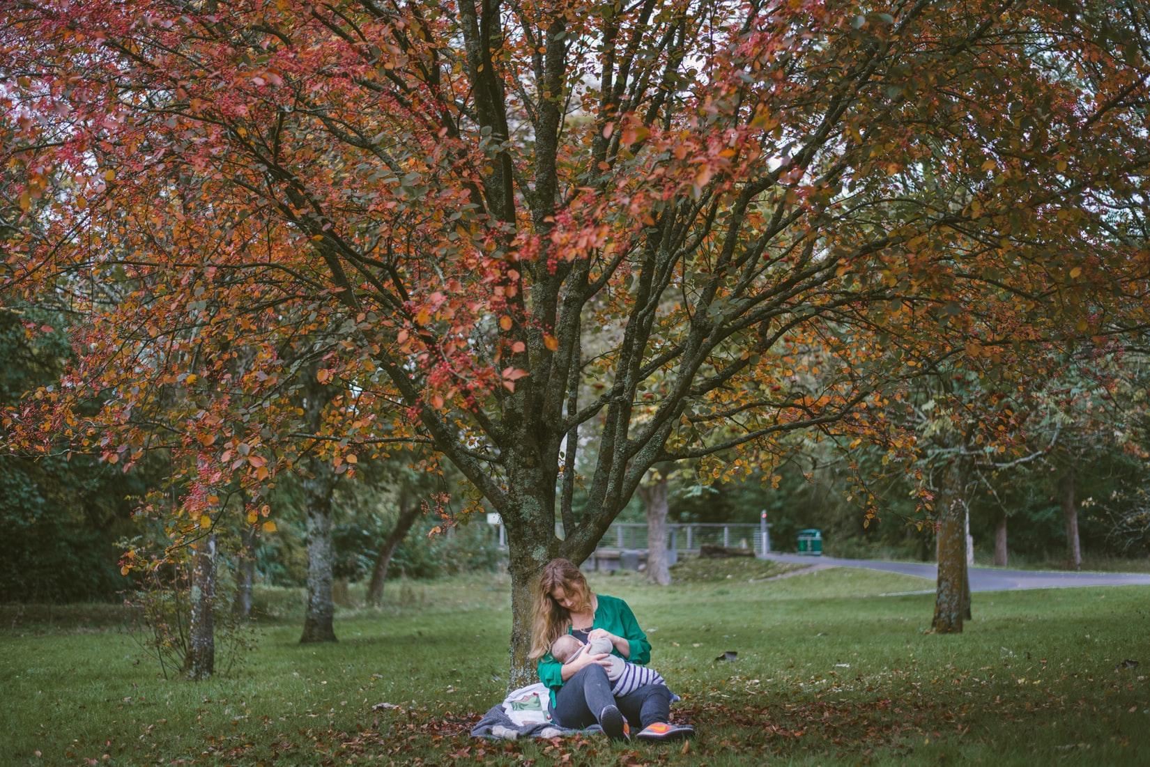木の下で授乳をしている母